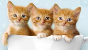 gatos más pequeños