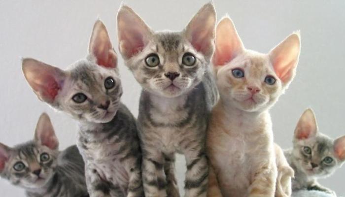 Camadas de gatitos