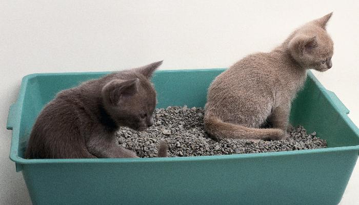 La mejor arena de sílice para gatos