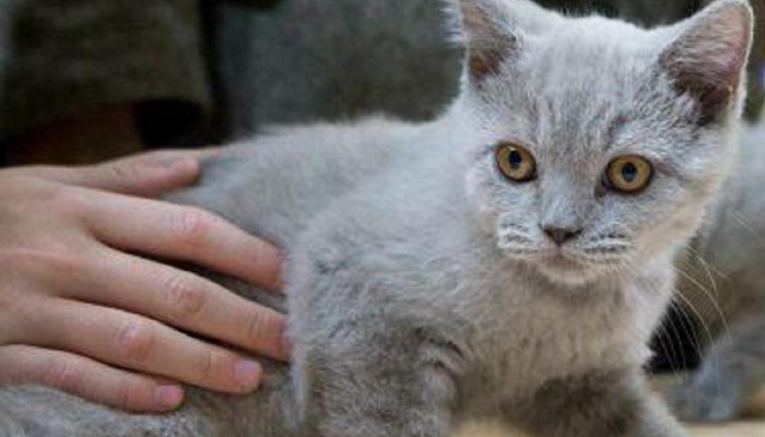 Gatitos siendo acariciados