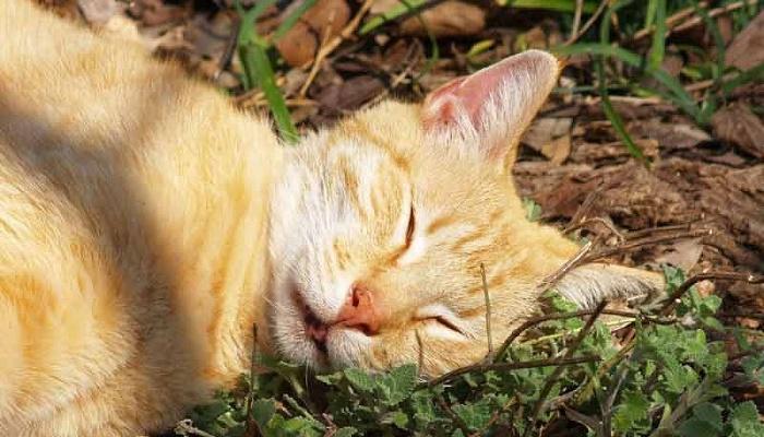 gatos y el catnip