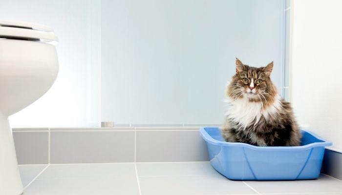 Gato estítico