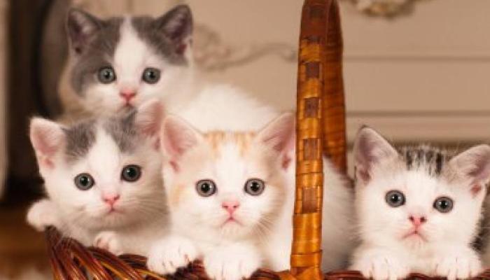 cuánto tarda un gato en crecer