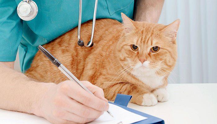 Gatitos en el veterinario