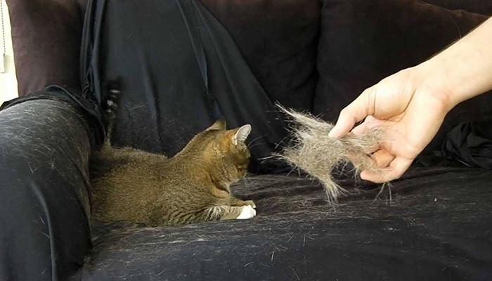 Gatos botando pelos