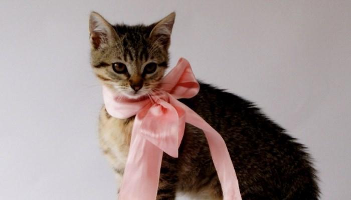 A qué edad se debe esterilizar una gata
