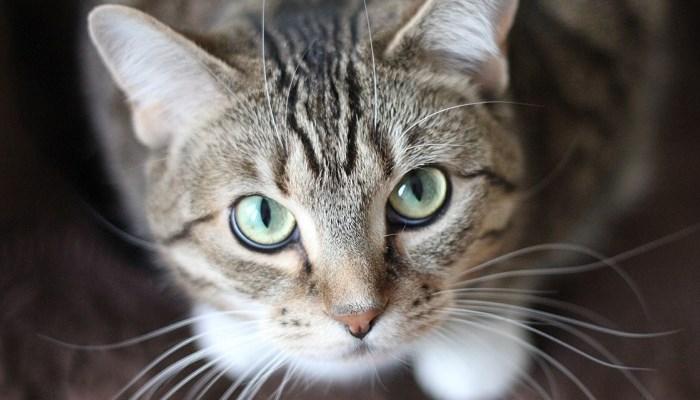 Gatita de ojos verdes