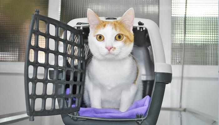 Minino en el veterinario