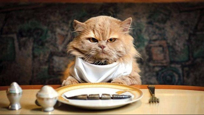 Gato comiendo pescado