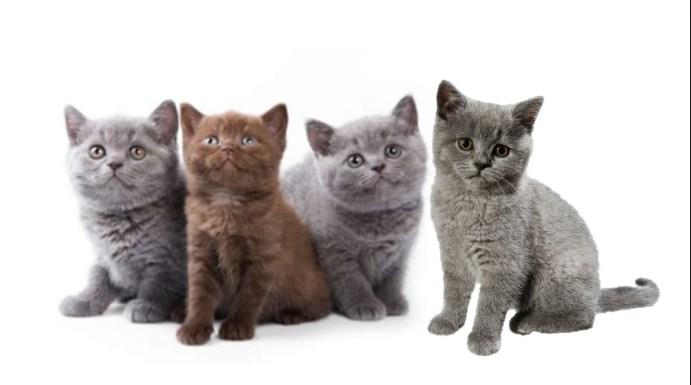 los gatos también cumplen un ciclo de vida