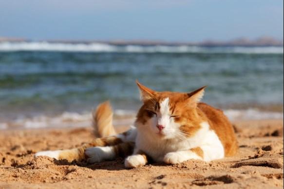 desestresantes para gatos