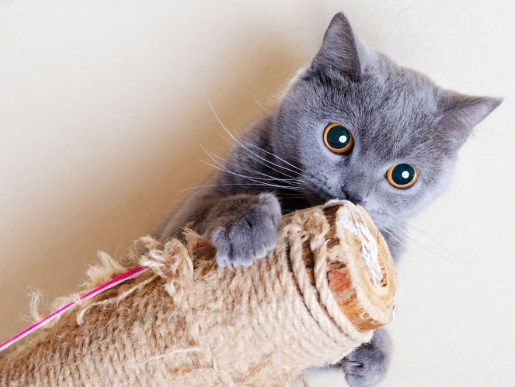 Para los gatos rascar o arañar es importante