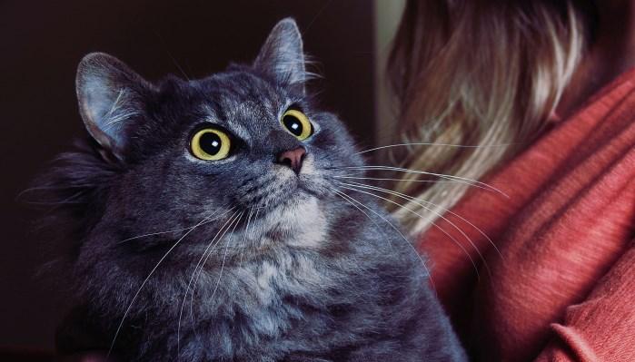 qué les asusta a los gatos