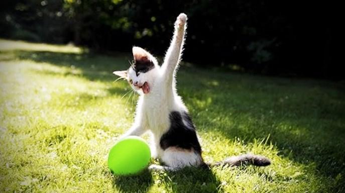 A los gatos les aterra tener globos cerca