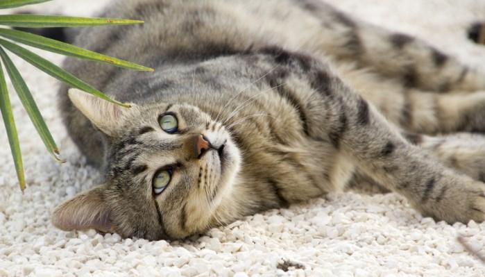 Los gatos prefieren la arena limpia y nueva