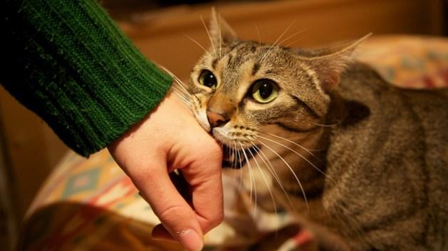 por qué los gatos te muerden cuando los acaricias