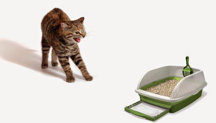 Eliminar olor a orina de tu gato