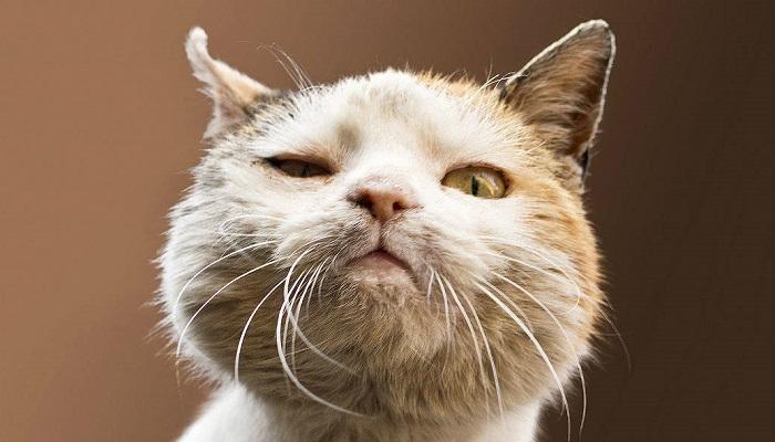 Conjuntivitis en gato