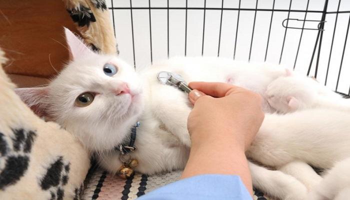 Enfermedades de los gatos más comunes