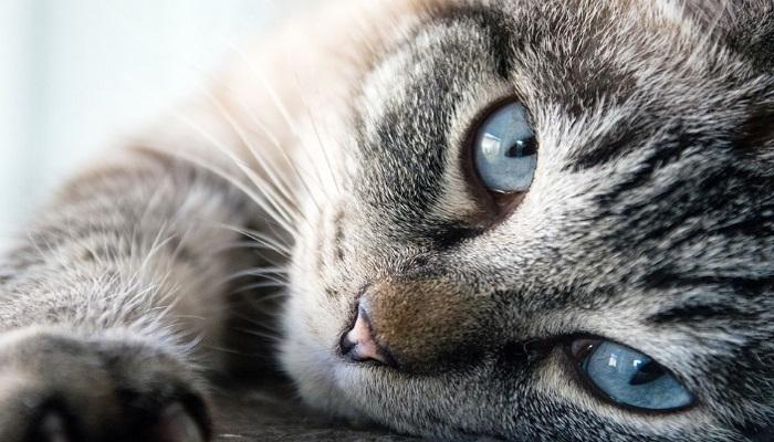 Cambio de conducta de tu gato