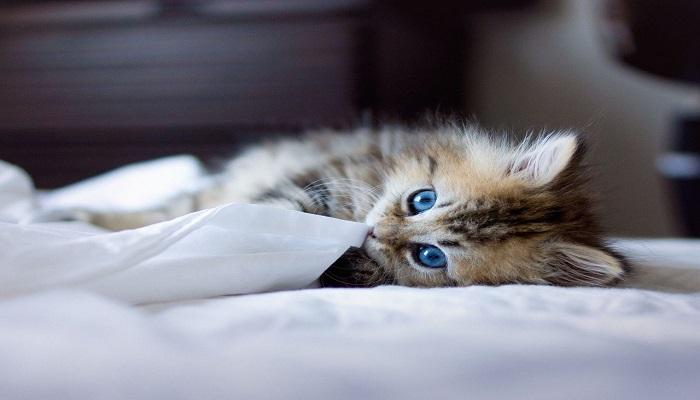 gato en su camita