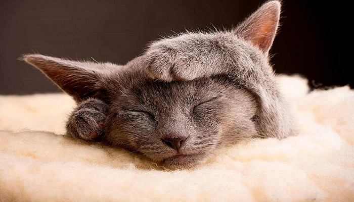 vitaminas para gatos desnutridos
