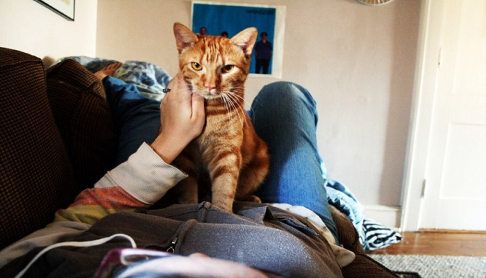 Los gatos amasan, y ya vamos a saber el porqué.