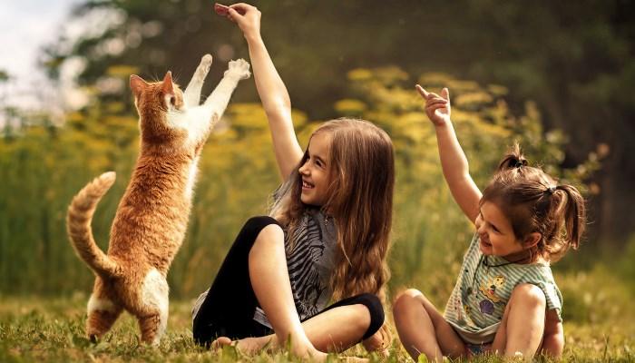 gato divirtiendo a niños