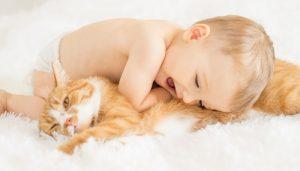 Descripción de un Gato para Niños 🙂  10 Gatos Domésticos para tu hijo