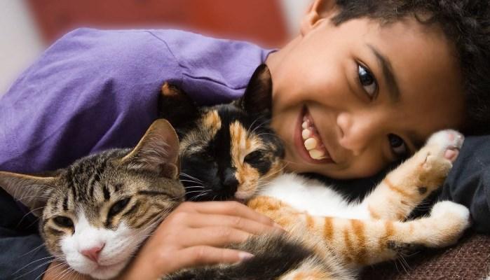 Gatos que hacen felices a los niños