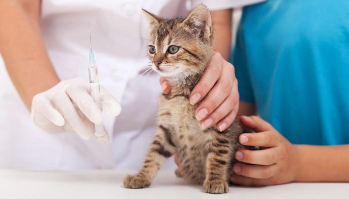 Vacuna para la leucemia felina