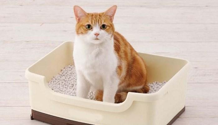 Cuánto dura la arena para gatos