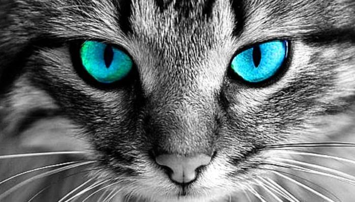 Enfermedades en los Ojos de los Gatos
