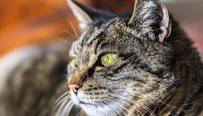 Los gatos tienen capacidad de ver fantasmas