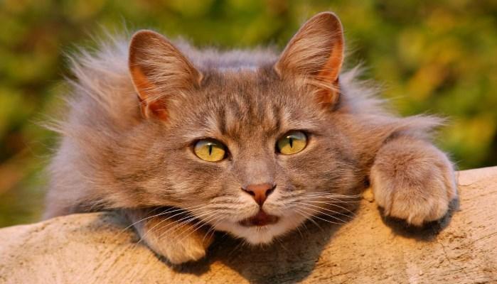 visión nocturna de los gatos
