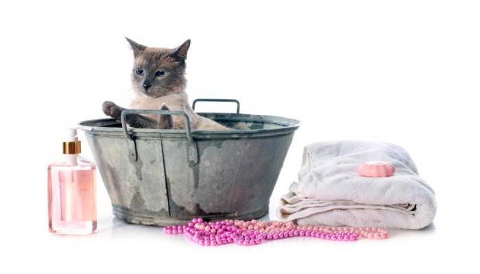 Baño para gatos