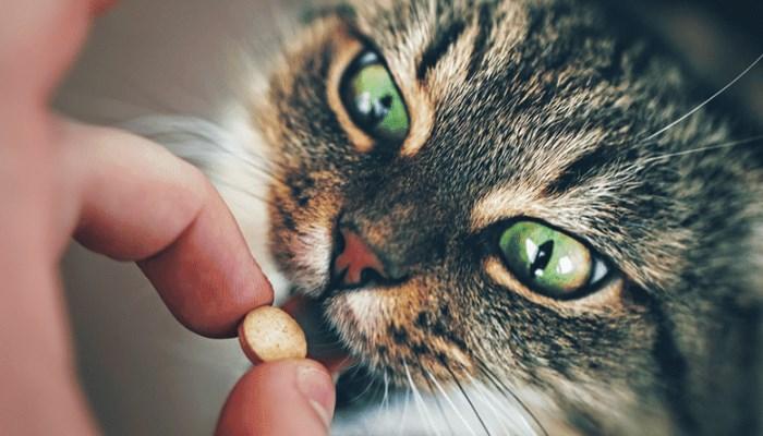 Tratamientos anticonceptivos hormonales para gatas