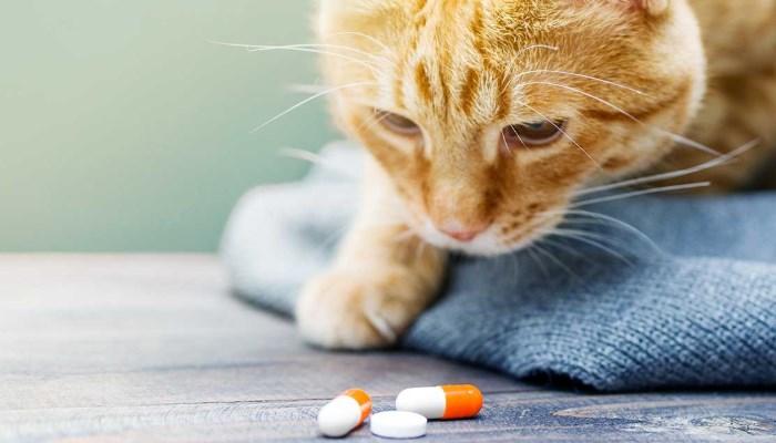 Efectos secundarios de las pastillas para cortar el celo de las gatas