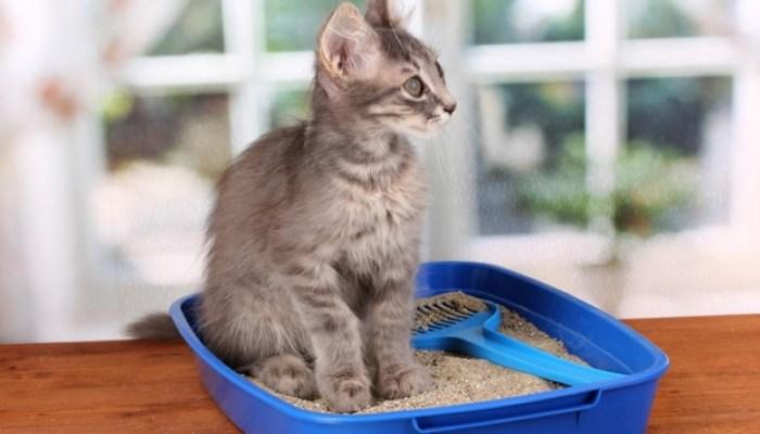 Dónde comprar arena para gatos