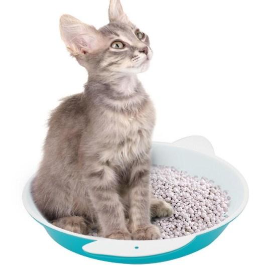 formas de preparar la arena para gatos