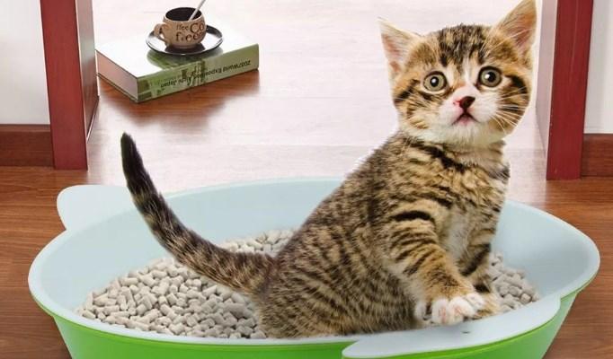 arena ecológica para gatos