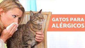 Razas de Gatos que no dan Alergias