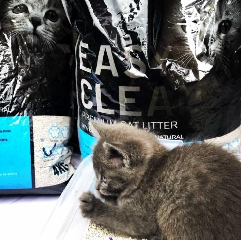 arena aglutinable easy clean en la caja de arena de tu gatito