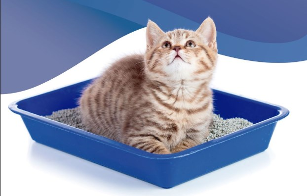 arena para gatos easy clean