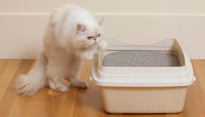 cómo hacer arena para gatos
