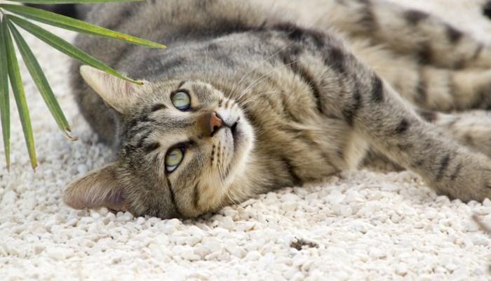 arenas biodegradables para gatos