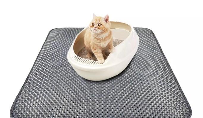 correcta higiene de la arena para gatos