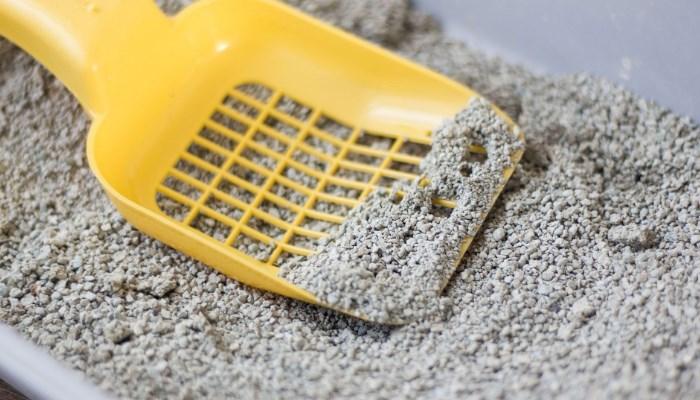 saber escoger la arena adecuada para su gato.