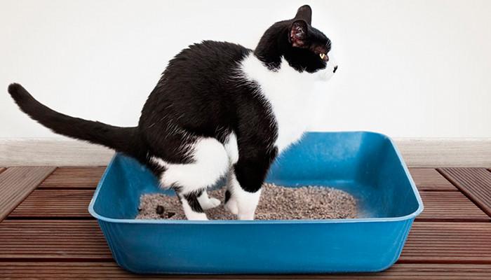 Gato haciendo caca en arenero
