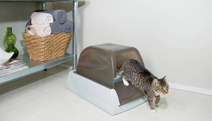 Gato saliendo de bandeja cerrada